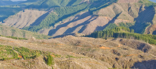 This is a photo taken from a ridge looking into the Siletz Gorge. photo credit. Rio Davidson